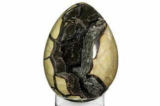 Septarian with Calcite & Barite - Fossils For Sale - #157899