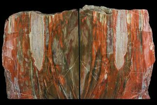"9.55"" Tall, Vibrant Petrified Wood Bookends - Madagascar For Sale, #158915"