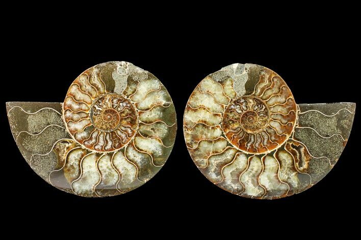 "Bargain, 5.2"" Agate Replaced Ammonite Fossil (Pair) - Madagascar"