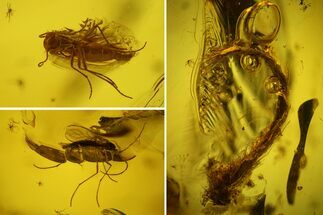 Two Fossil Flies (Diptera) and a Hairy Leaf in Baltic Amber For Sale, #159797