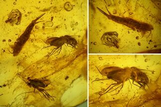 Two Fossil Flies, a Bristletail and a Hairy Leaf in Baltic Amber For Sale, #159806