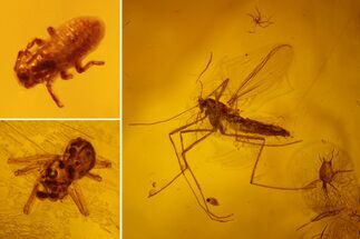 Order Hemiptera (Aphid), Order Araneae (Spider) & Order Diptera (Fly) - Fossils For Sale - #159894