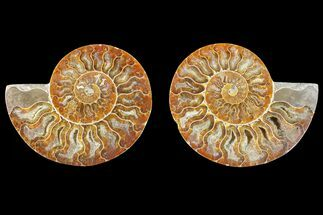 "Buy 4.6"" Agate Replaced Ammonite Fossil (Pair) - Madagascar - #150922"