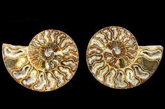 "Buy 4.5"" Agate Replaced Ammonite Fossil (Pair) - Madagascar - #150928"