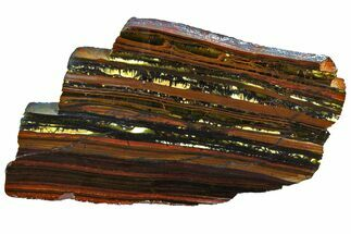 "5.8"" Polished Tiger Iron ""Stromatolite"" Slab - 3.02 Billion Years For Sale, #162002"