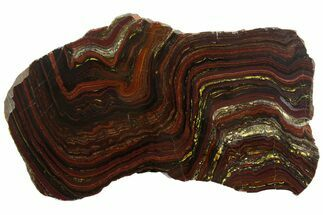 "Buy 10.8"" Polished Tiger Iron ""Stromatolite"" Slab - 3.02 Billion Years - #161884"