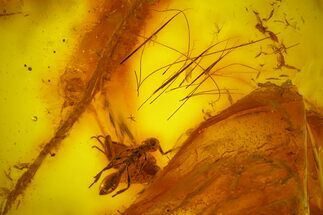 Fossil Mammalian Hair, Wasp & Fly Preserved in Baltic Amber - Rare! For Sale, #163505