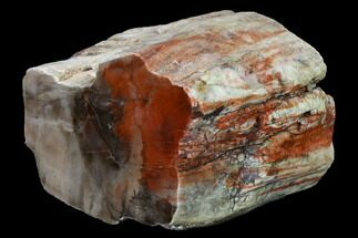 "4.4"" Red/Black, Polished Petrified Wood (Araucarioxylon) - Arizona For Sale, #165983"