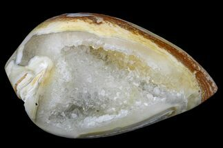 "1.3"" Chalcedony Replaced Gastropod With Druzy Quartz - India For Sale, #166930"