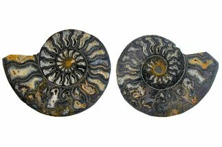 "3.1"" Cut/Polished Ammonite Fossil (Pair) - Unusual Black Color For Sale, #165476"