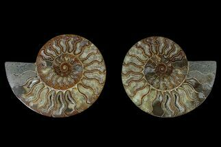 "Buy 6.3"" Agate Replaced Ammonite Fossil (Pair) - Madagascar - #166903"