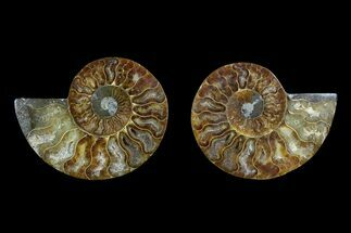 "Buy 4.1"" Agate Replaced Ammonite Fossil (Pair) - Madagascar - #166855"
