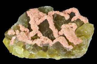 Fluorite & Barite - Fossils For Sale - #173970
