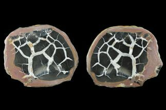 "Buy 2.95"" Cut/Polished Septarian Nodule Pair - Morocco - #174415"