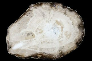 "8.2"" Polished Petrified Wood (Willow) Round - Washington For Sale, #175070"