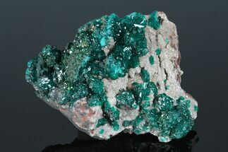 "Buy 2.1"" Gemmy Dioptase Crystal Cluster - N'tola Mine, Congo - #175945"
