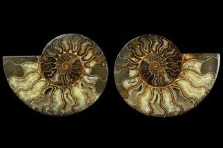 "5.9"" Agate Replaced Ammonite Fossil (Pair) - Madagascar For Sale, #169019"