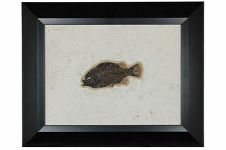 "5.1"" Framed Fossil Fish (Cockerellites) - Wyoming For Sale, #177302"