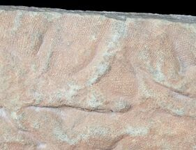 Unknown Reptile - Fossils For Sale - #12267