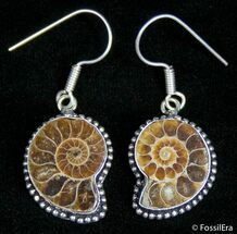 Cut And Polished Ammonite Earrings For Sale, #2678