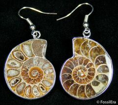 Buy Ammonite Earrings - #2683