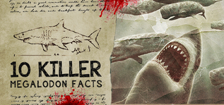 10 Killer Megalodon Shark Facts For Sale