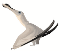 Artists reconstruction of the Pterosaur, Anhanguera. By Matt Martyniuk (Creative Commons)