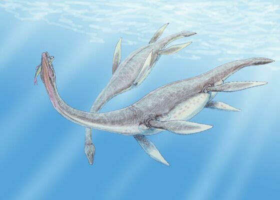 An artists reconstruction of a pair of Plesiosaur.  By Dmitry Bogdanov 