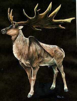 Life reconstruction of the extinct giant deer, genus Megaloceros