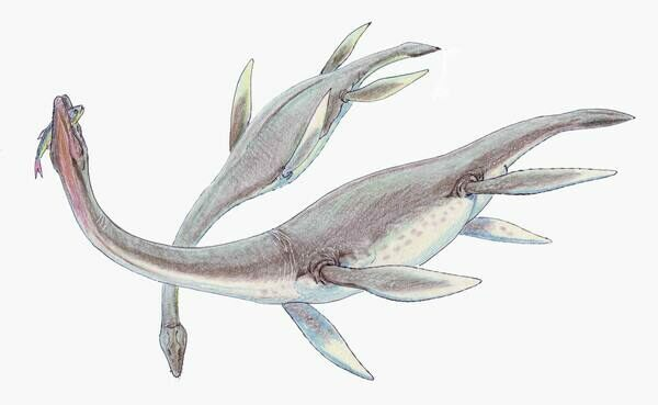 An artists reconstruction of Plesiosaurus dolichodeirus.  By Dmitry Bogdanov  Creative Commons License