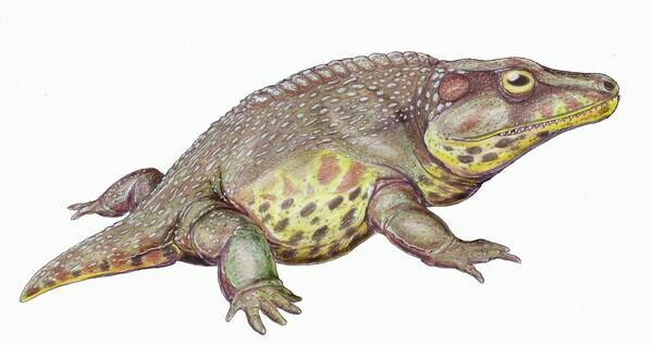 Artists reconstruction of Cacops.  By Dmitry Bogdanov Creative Commons License