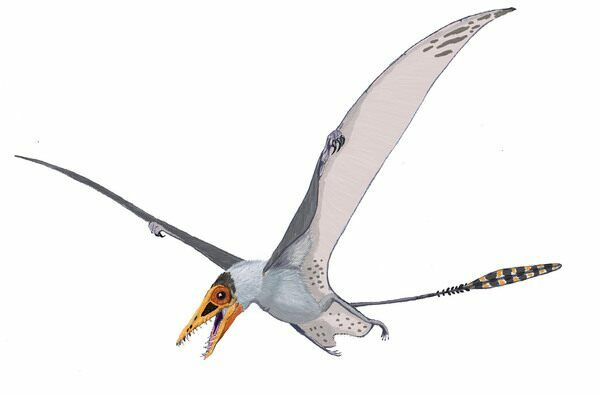 Artists reconstruction of a pterosaur.  By Dmitry Bogdanov. 