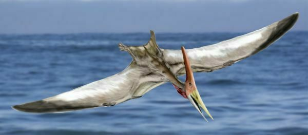 An artists rendition of a flying Pteranodon.  By Nobu Tamura (www.palaeocritti.com)