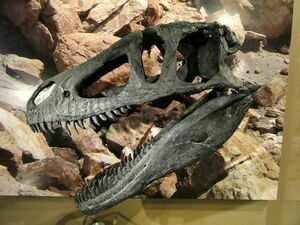 Skull cast of Marshosaurus at the Natural History Museum of Utah, Salt Lake City, Utah