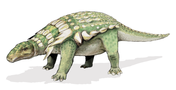 An artists interpretation of the a nodosaur (Edmontonia rugosidens).  By Mariana Ruiz (Public Domain)