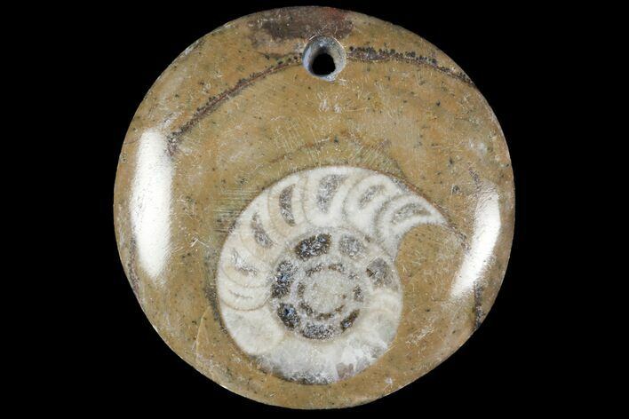 Wholesale Lot: Fossil Goniatite Pendants - 100 Pieces - Photo 1