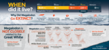 "24x36"" Megalodon Infographic Poster (Matte Finish) - Photo 4"