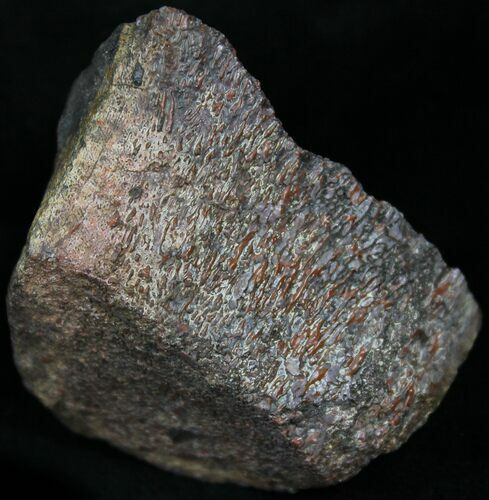 Red Agatized Dinosaur Bone - 2 Ounces