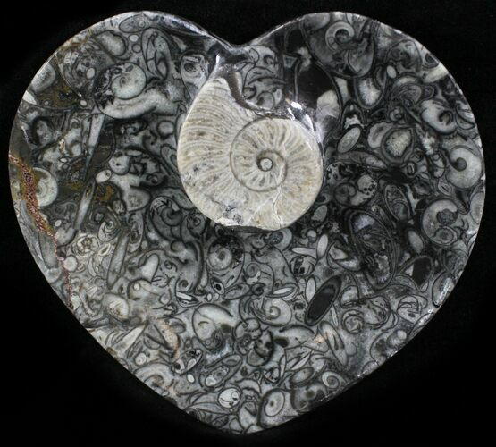 Heart Shaped Fossil Goniatite Dish