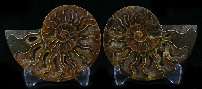 "2.9"" Polished Ammonite Pair - 110 Million Years"