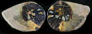 "Buy 1.5"" Iron Replaced Ammonite Fossil Pair - #27466"