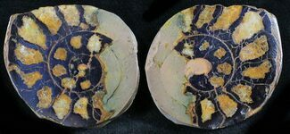 "Buy 1.1"" Iron Replaced Ammonite Fossil Pair - #27478"