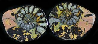 "1.1"" Iron Replaced Ammonite Fossil Pair For Sale, #27488"