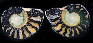 "Buy 1.2"" Iron Replaced Ammonite Fossil Pair - #27493"