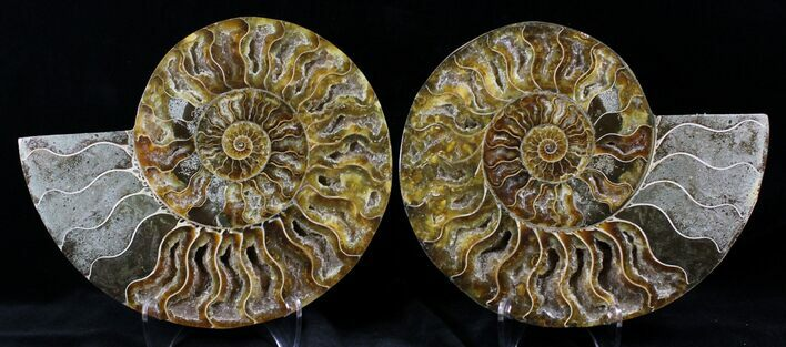 "7.35"" Cut And Polished Ammonite Pair - Agatized"