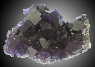 Fluorite - Fossils For Sale - #31395