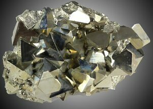 Pyrite - Fossils For Sale - #31032