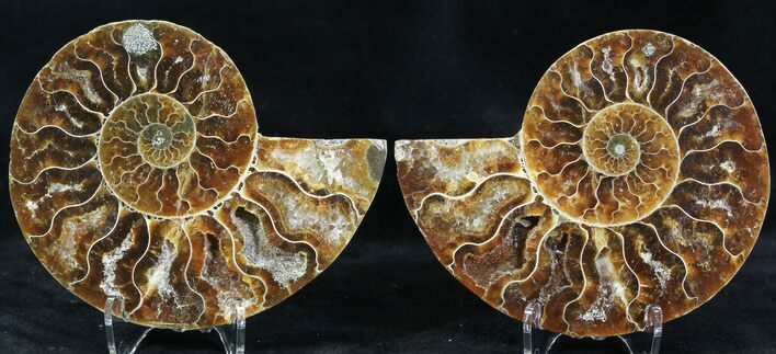 "3.55"" Polished Ammonite Pair - Crystal Pockets"