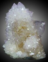 "2.05"" Cactus Quartz (Amethyst) Cluster - South Africa For Sale, #33899"
