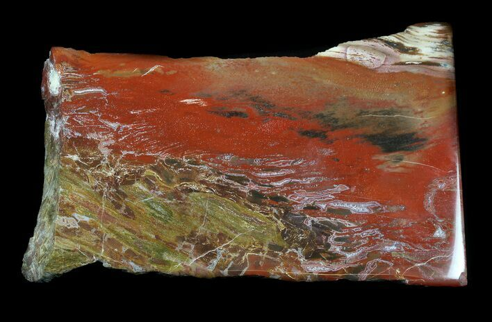 "5.6"" Jurassic Petrified Wood Slab - Henry Mountain"
